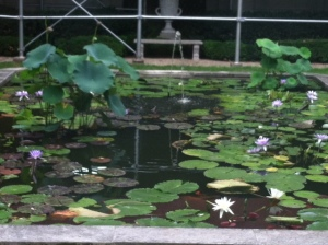 Lotus pond at Frick