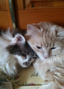 Timmy and Persy