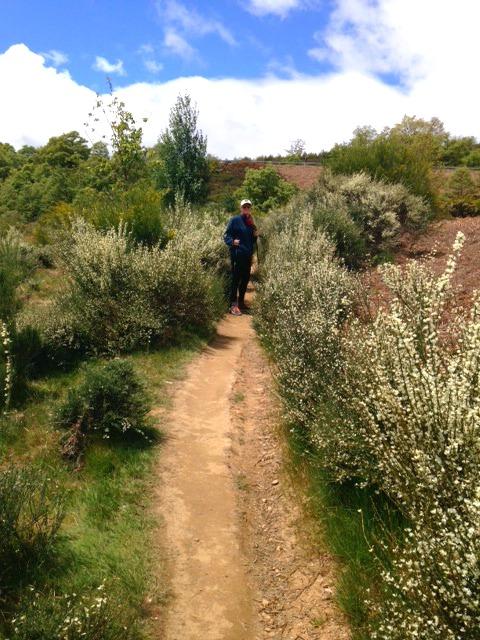 shrubby path